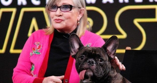 carrie-fisher-gary-the-dog-tribute-1069713
