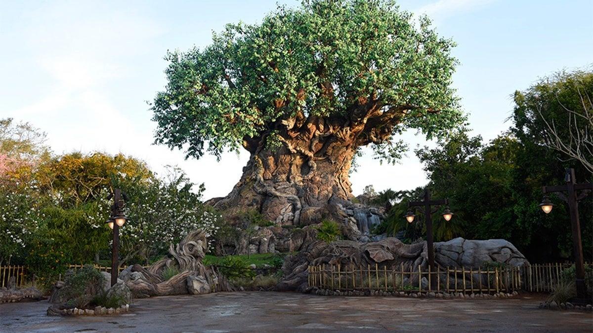Disney World Starts Demolition on Divisive Animal Kingdom Ride