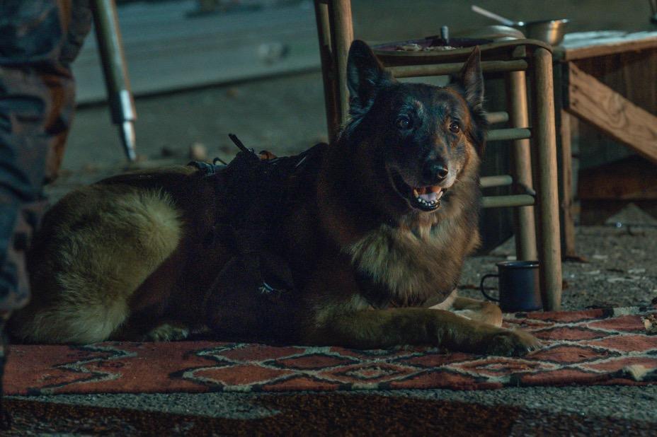 the-walking-dead-dog-season-11-episode-4.jpg