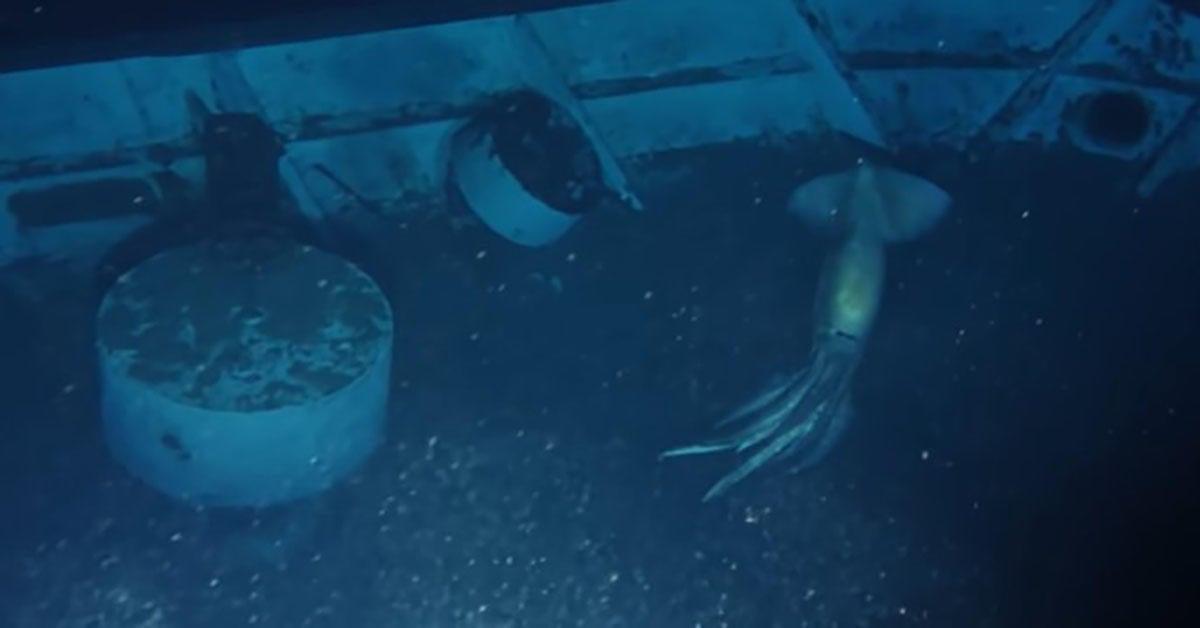 giant-sea-creature-oceanx
