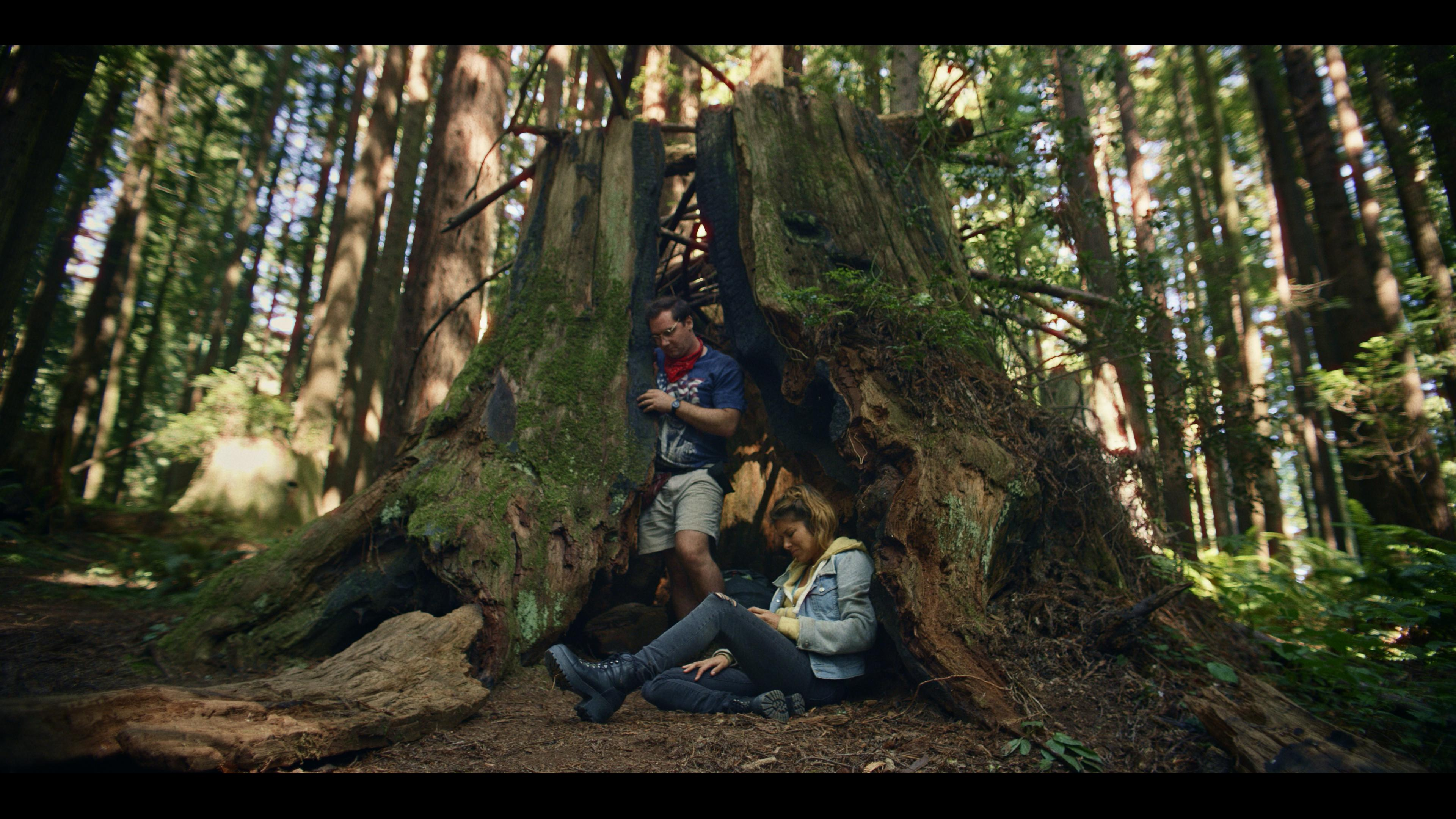 bigfoot-famous-tree