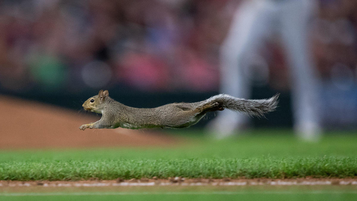 Squirrel steals show at White Sox-Twins game, disrupts dugout and runs through player's legs
