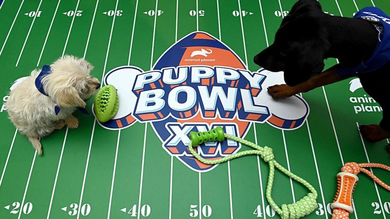 A look at all of the adorable 2020 Puppy Bowl participants
