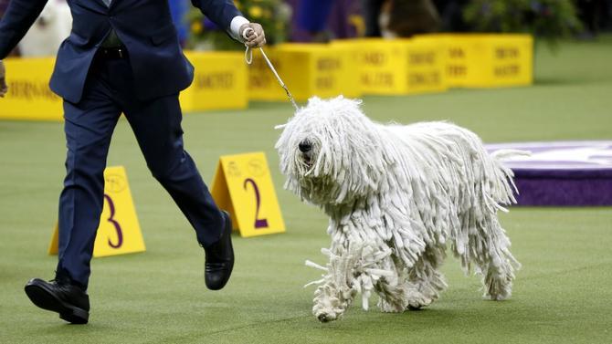 westminster-dog-show-shaggy-dog.jpg