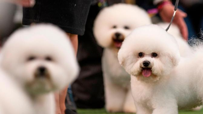 westminster-dog-show.jpg