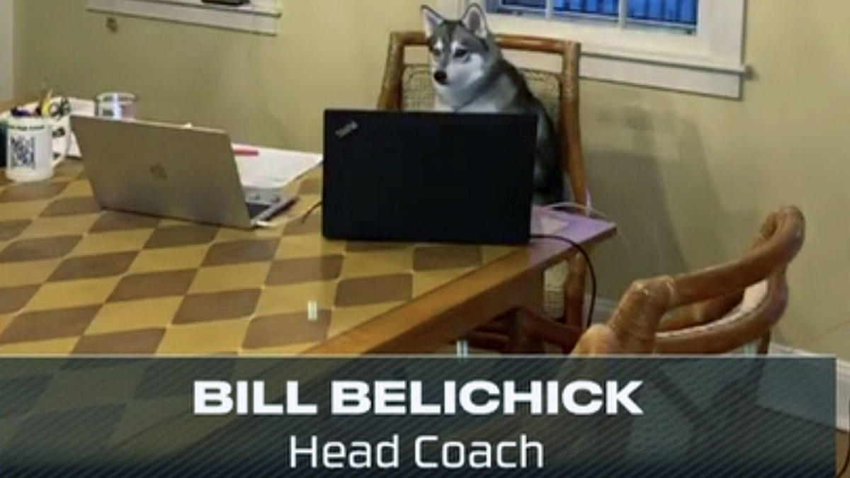 How Bill Belichick's dog Nike became an internet sensation at the ...